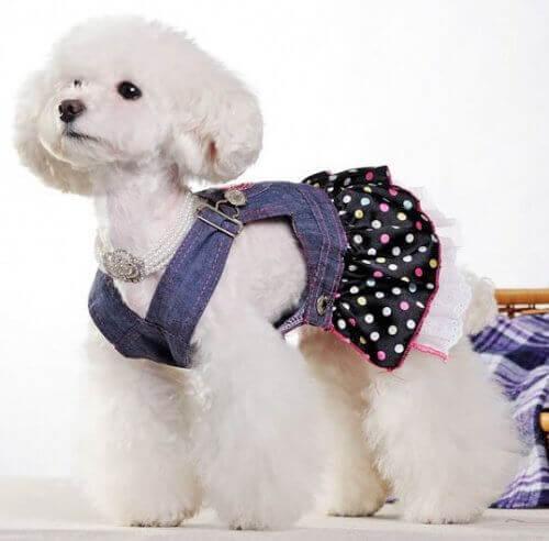 Hond met Pakje van Jeans