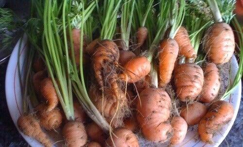 Zelf thuis worteltjes kweken