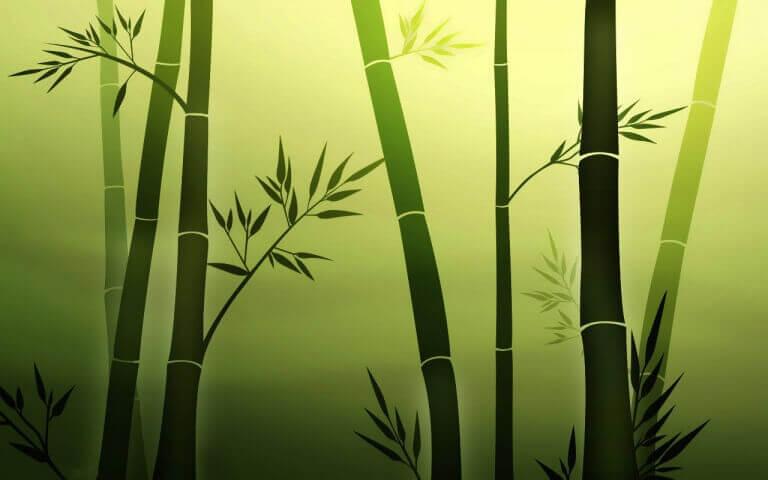 als je net als de soepele bamboetak bent zul je met de wind mee zwaaien en niet alles persoonlijk opvatten