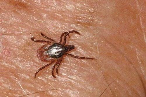 Krim-congovirus