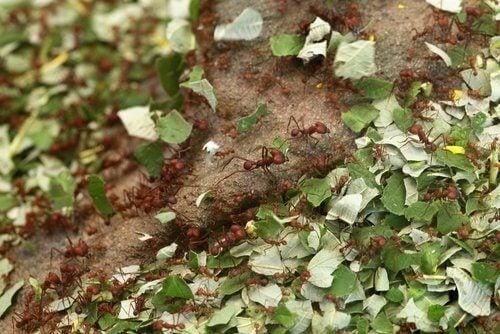 Kaneel om je planten te beschermen tegen insecten tijdens het tuinieren
