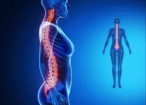 Ontdek hoe je je ruggengraat in slechts twee minuten kunt rekken