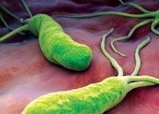 Helicobacter Pylori Bacterie