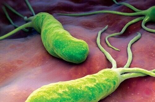 Wat je moet weten over de Helicobacter Pylori bacterie