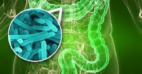 Bacteriën in de darmen
