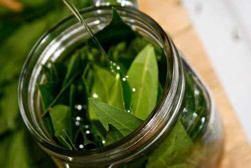 De geweldige voordelen van laurierolie