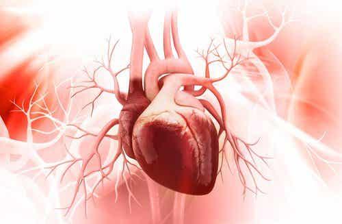 3 manieren om de gezondheid van je hart te verbeteren