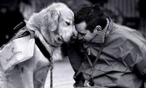 Vecht tegen heimwee samen met een hond