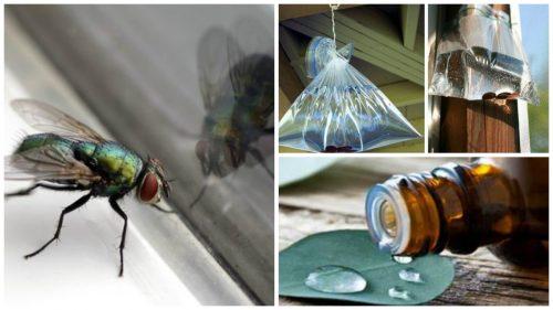 Huisvliegen