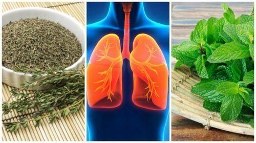 Verbeter de gezondheid van je longen met 8 kruiden