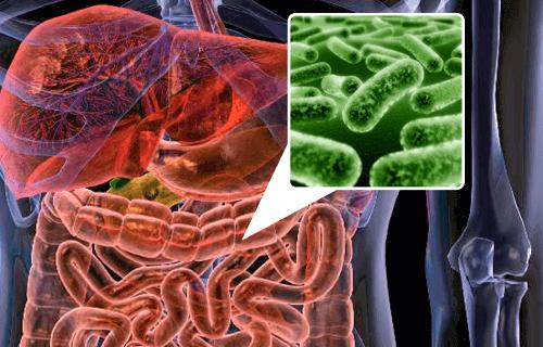Darmflora en bacterieën