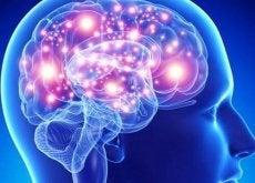 Kruiden Hersenen Verzorgen