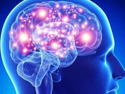De beste kruiden voor je hersenen