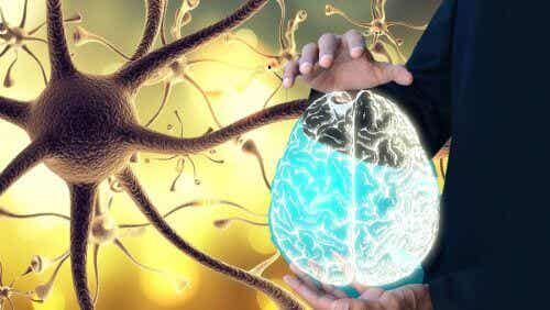 Schud je nervus vagus wakker en stimuleer de algehele gezondheid