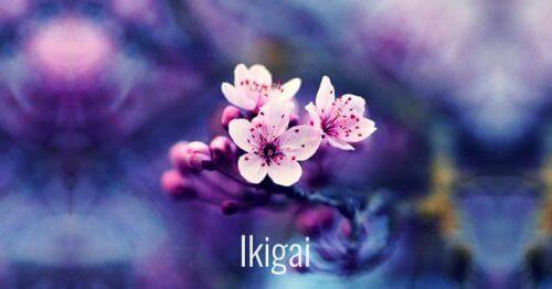 7 mooie Japanse woorden die persoonlijke groei mogelijk maken