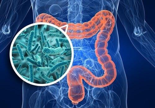 Darmflora in het lichaam