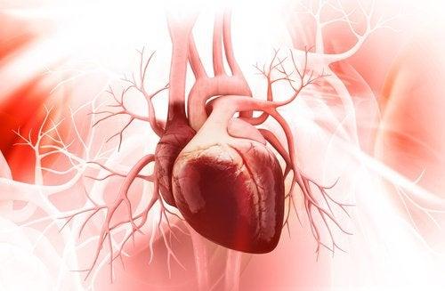 Zeven tips voor een gezond hart
