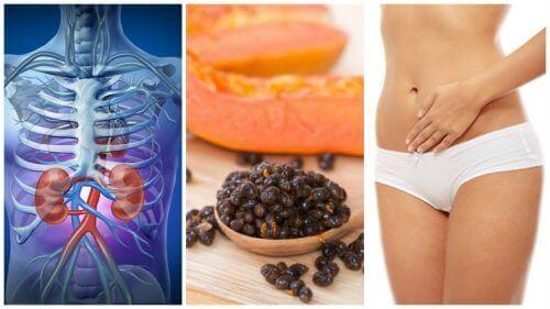 Hoe heilzaam zijn de zaden van papaja voor je lichaam?