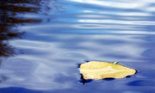 Blad in het water