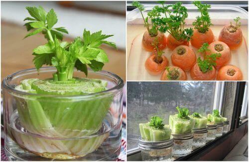 Vijf groenten die makkelijk te kweken zijn