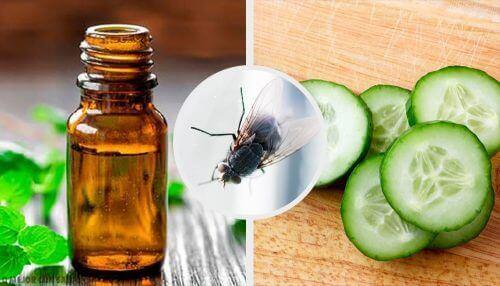 Vliegen op afstand houden met deze natuurlijke afweermiddelen