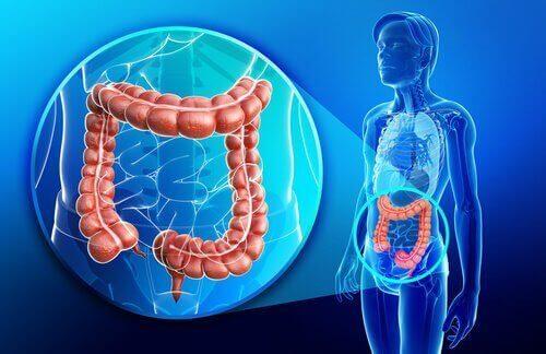 Wat is de ziekte van Crohn?