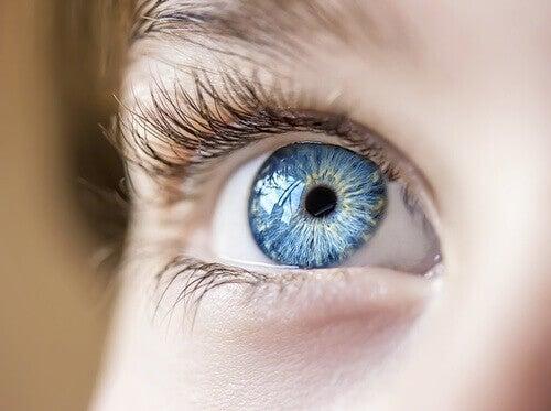 Pompoen en je ogen