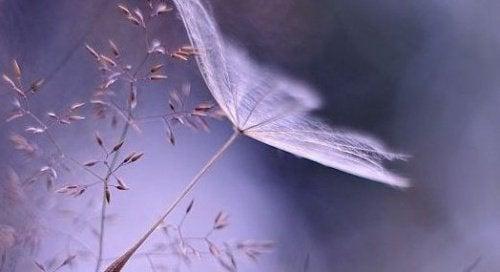 Rustgevende bloem