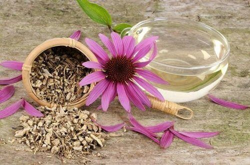 Echinaceathee voor het lymfatisch systeem te reinigen