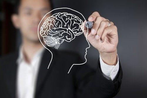 Wetenschappers ontdekken dat de visuele cortex pas na 36 jaar volwassen is