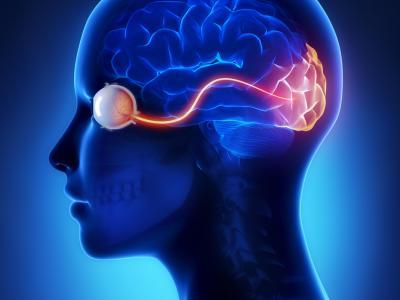 Devisuele cortex blijft zich ontwikkelen tot 36 jaar