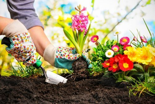 5 geweldige ideeën om een minituin te creëren in huis