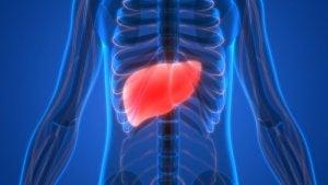 Vier oorzaken en vijf symptomen van leverfalen