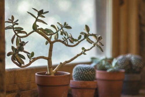 7 voordelen van een plant in huis hebben