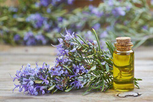 Etherische oliën voor je schoonheid van rozemarijn