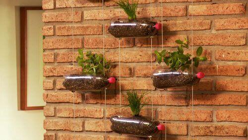 Ontwerp de hangende tuin