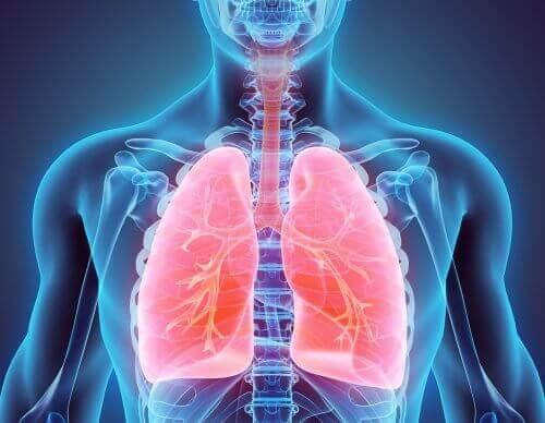 Leren hoe je kunt stoppen met roken en je longen schoon kunt maken