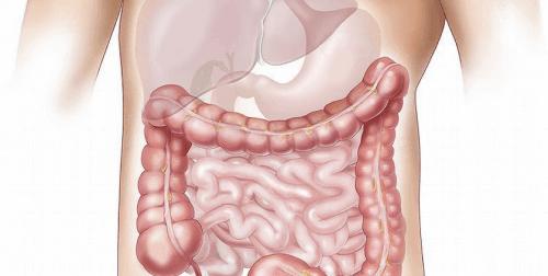 Je darmen zijn een thuis voor miljarden bacteriën