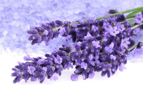Lavendel is een van de kruiden om je bloeddruk te verlagen
