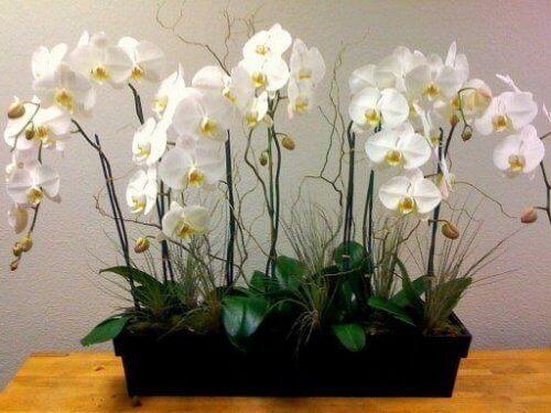De lucht in je huis zuiveren met orchideeën