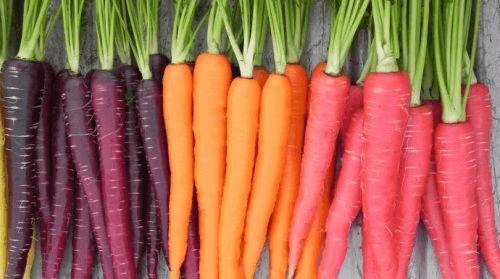 Wortels in verschillende kleuren