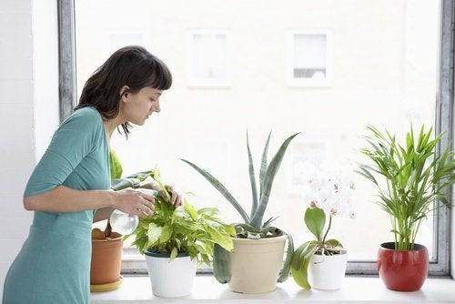 8 kamerplanten die de lucht in je huis zuiveren