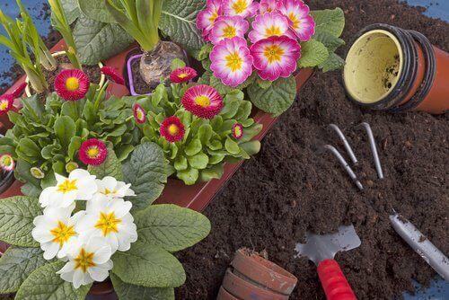 Bak met gezonde bloemen en planten