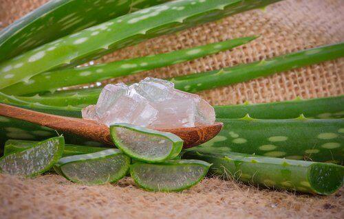 Huismiddelen tegen schurft aloevera