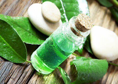 Tea tree olie als middel tegen hoofdluizen