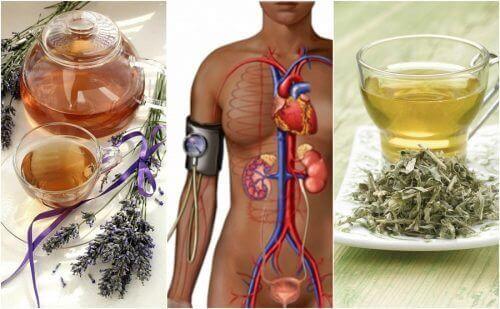 Verlaag je bloeddruk met kruiden!