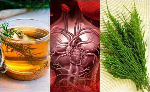 De bloedsomloop verbeteren met vijf remedies op basis van kruiden