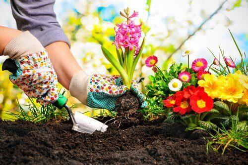 Vrouw die verschillende bloemen plant