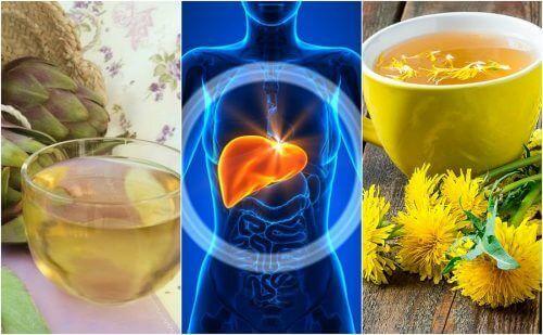 Bestrijd leververvetting op natuurlijke wijze met vijf kruidenmiddeltjes