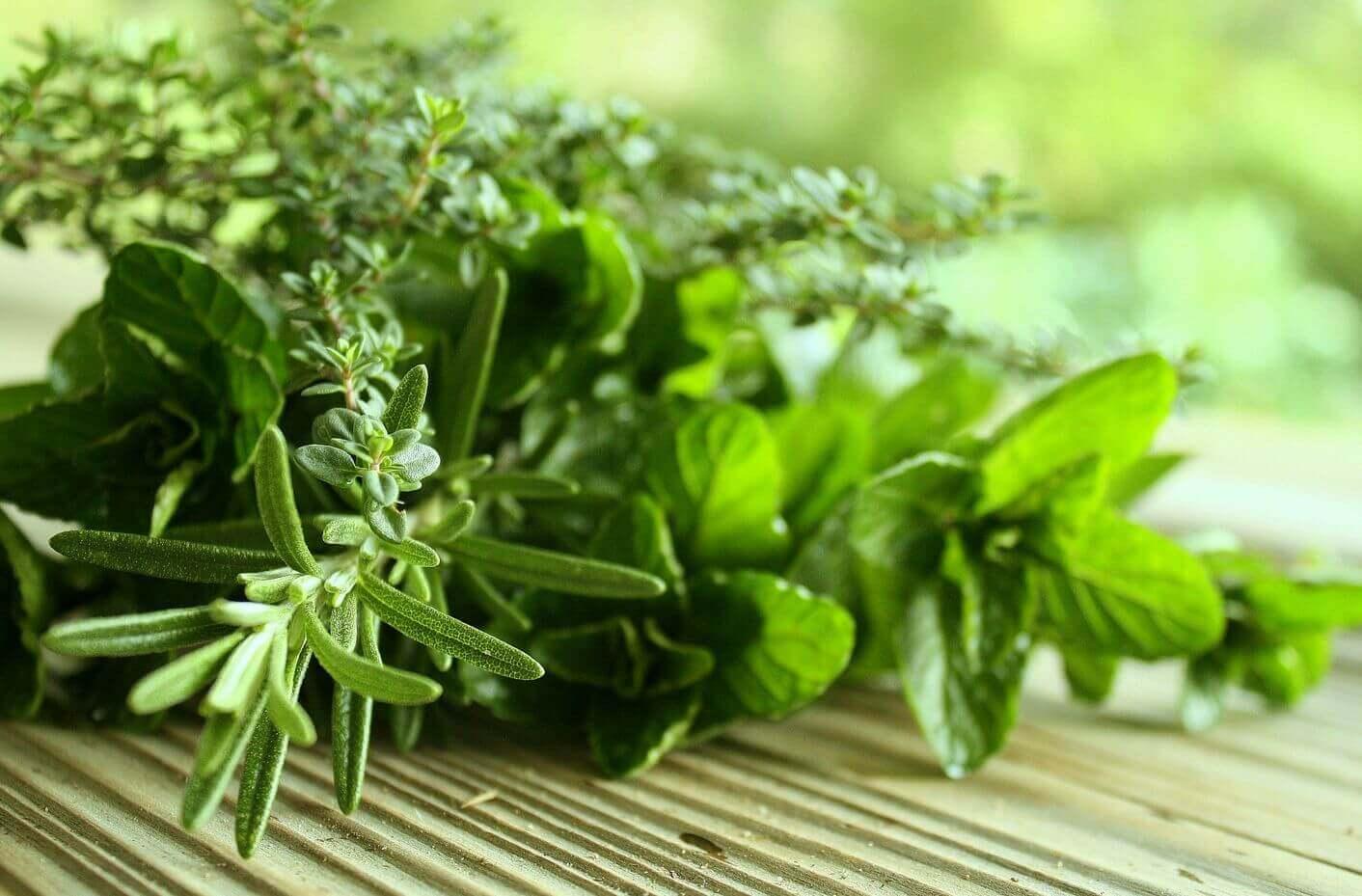 Natuurlijke kruiden om slechte adem te bestrijden